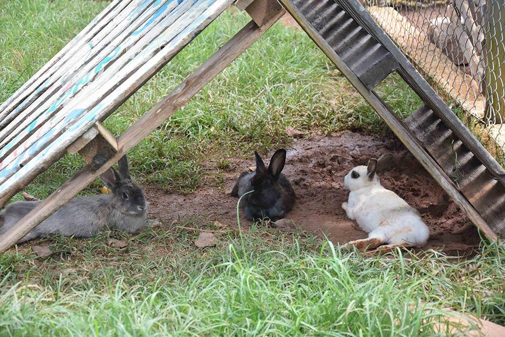 A Fazenda Capoava é cheia de coelhos e outros animais, ótimo para crianças que estão acostumadas a ficar dentro de apartamento! Conheça mais sobre esse hotel incrível pertinho de São Paulo no post!