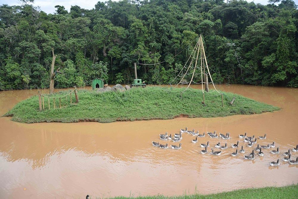 Na Fazenda Capoava tem até uma ilha dos macacos! veja mais sobre esse hotel pertinho de São Paulo no post!