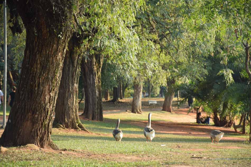 Agenda Kids - Parque Ibirapuera